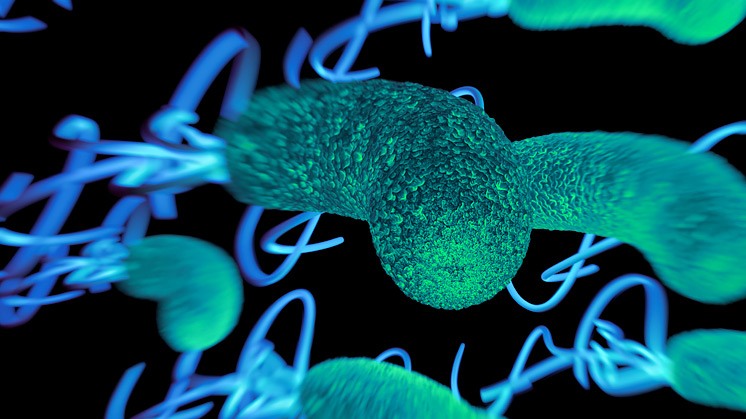 Introduction To Campylobacter Food Safety Joint Working Group